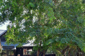 Tree rmoval Auckland Stott & Co Tree Experts