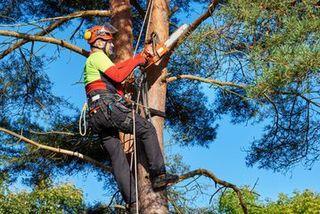Tree work Auckland