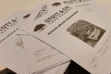 arborcultural assessment Auckland Stott & Co Tree Experts